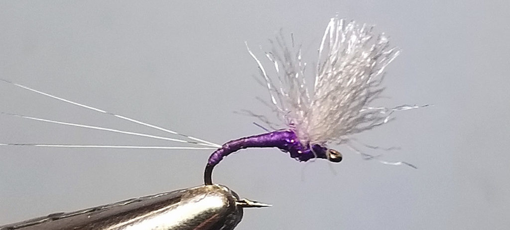 illustrates purple upbeat mayfly